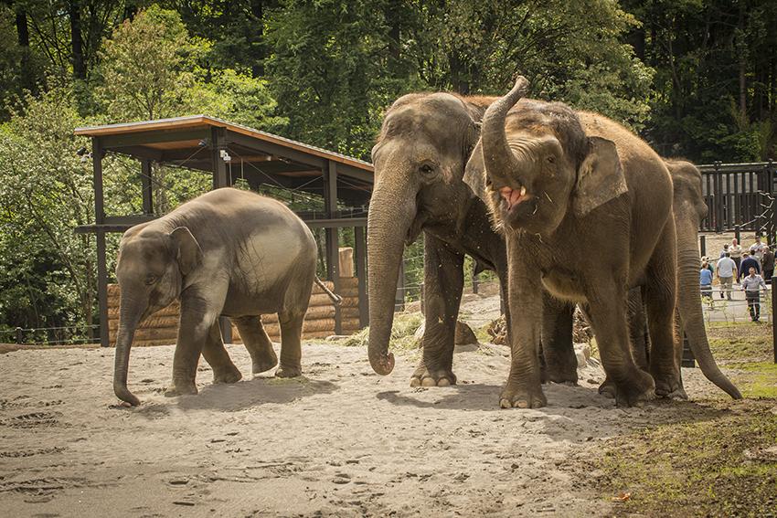 Oregon Zoo Elephant Lands, Portland