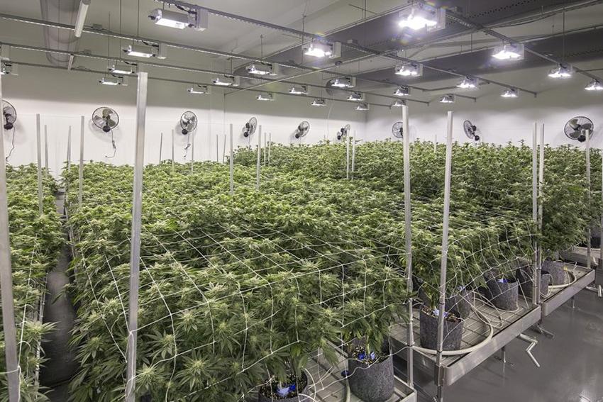 Cloud Cover Cannabis, Portland